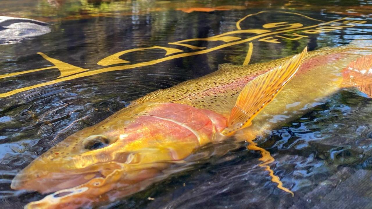Adams Fly Rod Big Fish