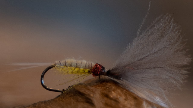 Mayfly Emerger Fliege zum Fliegenfischen.