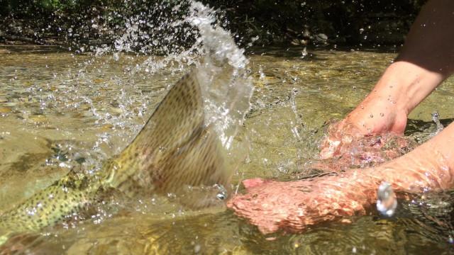 Fliegenfischen im Herbst